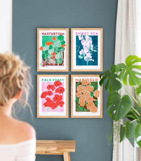 seed flower illustrations
