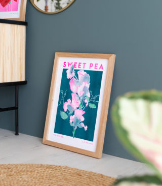 sweet pea illustration